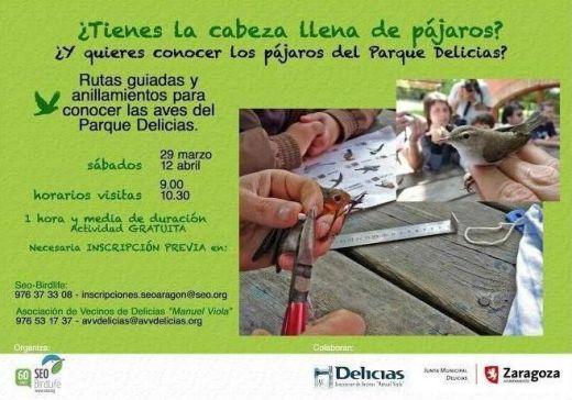 Aves-Delicias